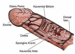prostat haplari